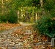 Trakų Vokės dvaro parkas
